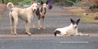 Dogs - Humans Best Friend - Karaikudi