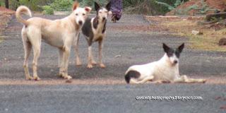 Dogs - Humans Best Friend - Karaikudi