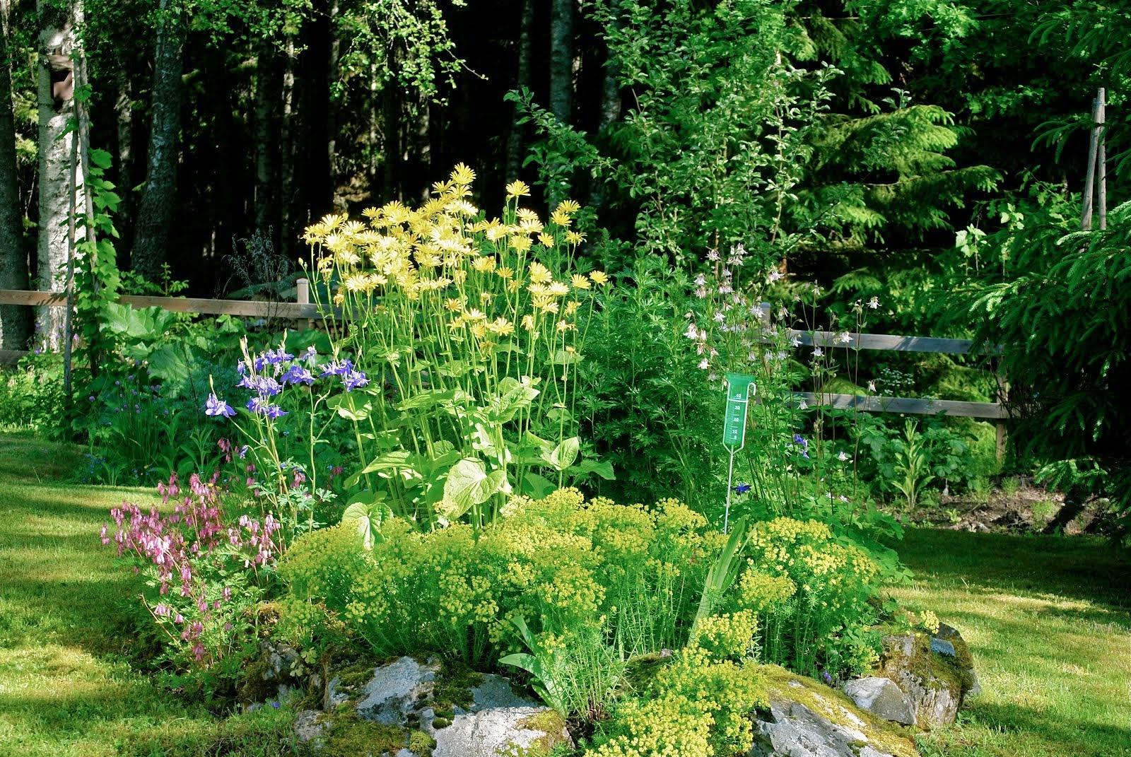 Vårplantering framför granskogen