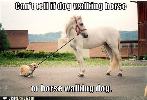 funny captions cant tell if dog walking horse or horse walking dog the modern equestrian the meme ing equestrian