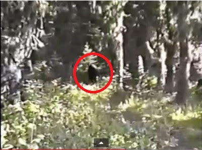 Freeman Footage Bigfoot Film