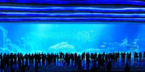 Maior aquário do mundo