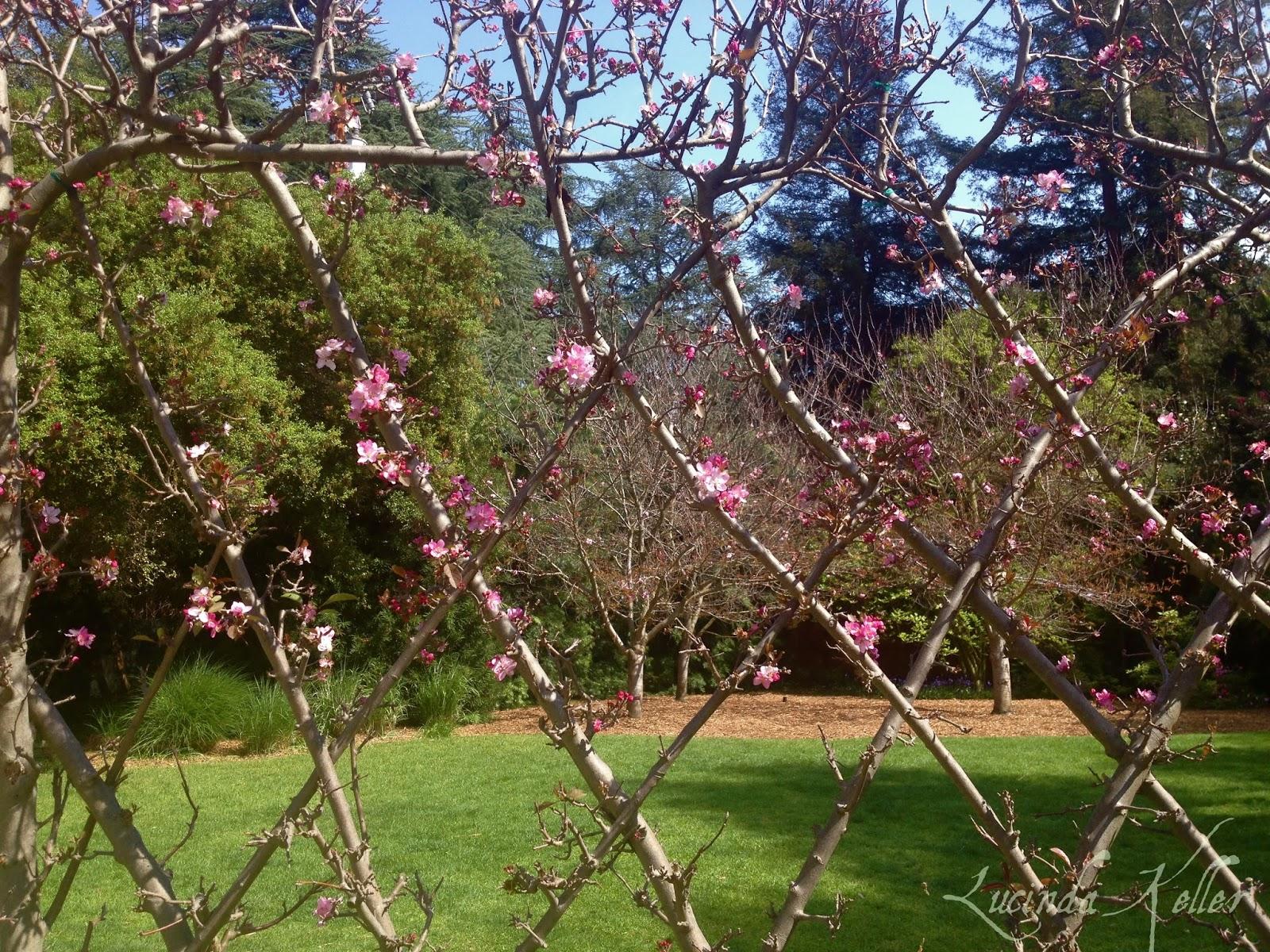 Cobalt Violet: Spring in Descanso Gardens ~ Part I
