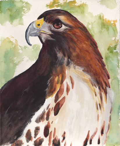 Hawk painting watercolor - photo#13