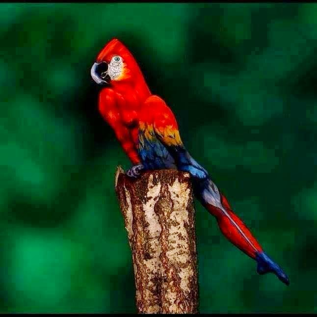 """Johannes Stoetter, 35, spent four weeks painstakingly planning creation Painted woman's body to resemble tropical bird, before taking photographs Model's left leg becomes parrot's tail feathers, while right leg forms wing 'Most people's reaction are """"nice photo of a parrot"""",' said the Italian artist"""