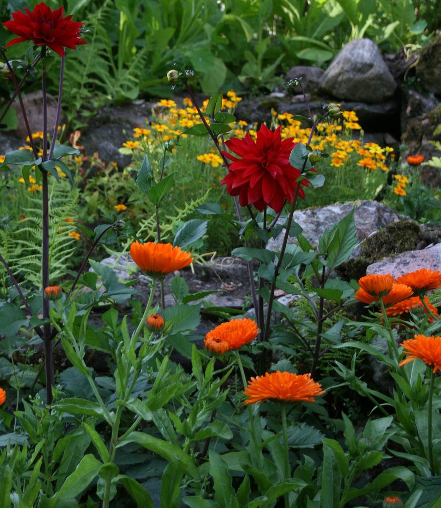 Abriachan Nurseries The Garden On Loch Ness August 2011