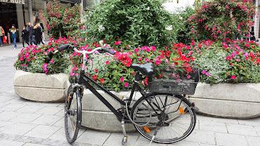 #19 Bikes Wallpaper