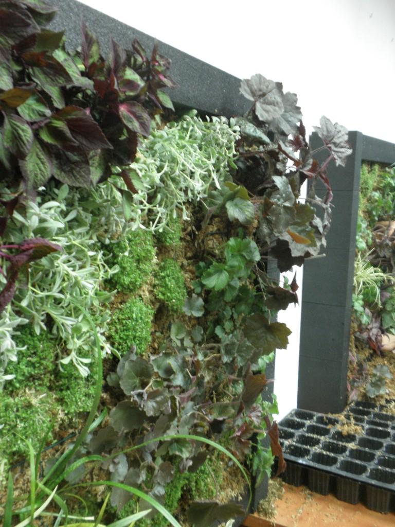 Xito de los cursos intensivos de jardines verticales for Jardines verticales alicante