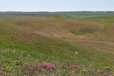Розовая долина, Курская область
