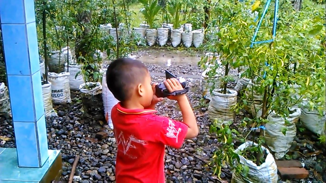 Manfaat Budidaya Cabe Organik di Halaman Rumah sebagai Media Pembelajaran bagi Anak