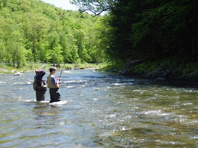 Vermont fly fishing vermont black river trophy trout fishing for Vermont trout fishing
