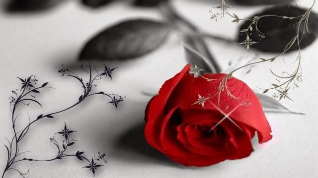 Rose flower hd wallpaper for desktop free download