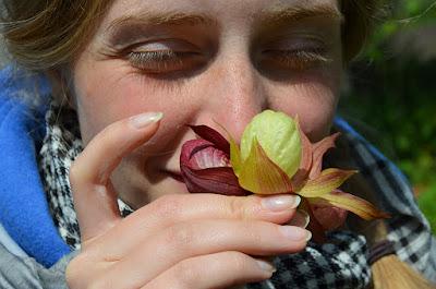 Цветки венериного башмачка