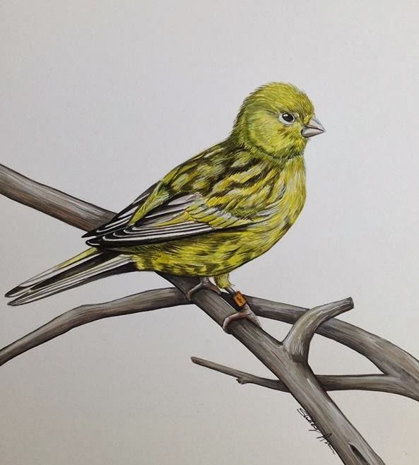 Whoopidooings: Green canary by Live Art, Breathe Art on Facebook