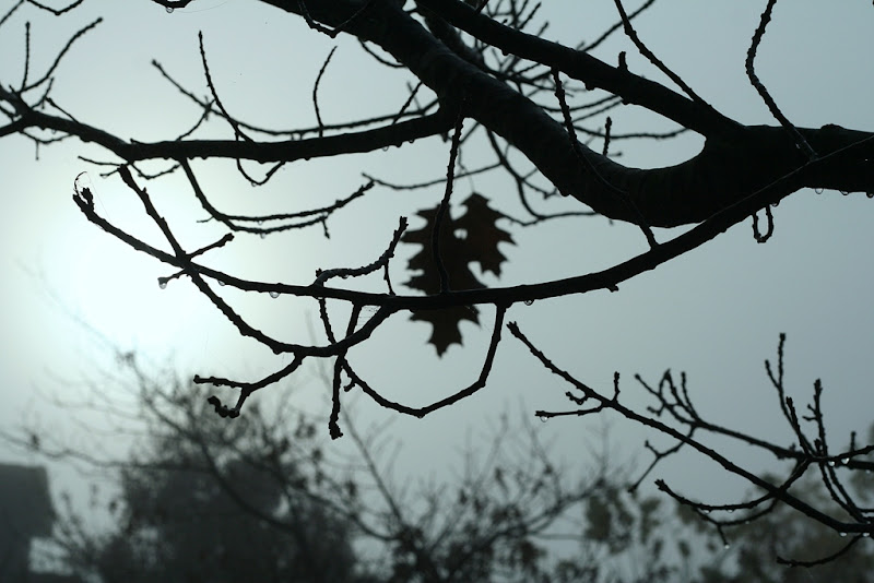 branch silhouette against a grey sky, only 2 leaves remain on the branches, and water droplets hang all over