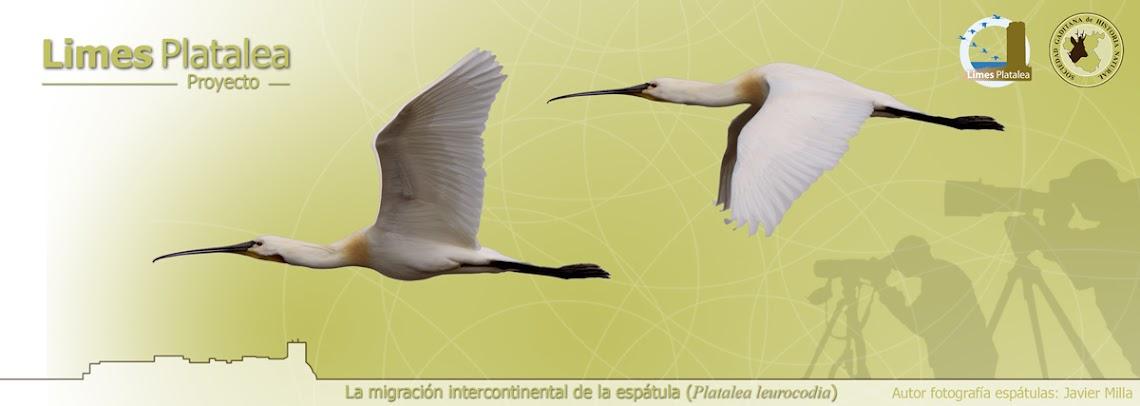 Limes Platalea-Sociedad Gaditana de Historia Natural