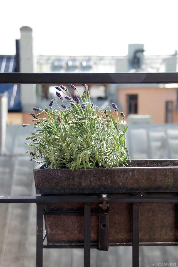aliciasivert, alicia sivertsson, alicia sivert, balkong, lavendel