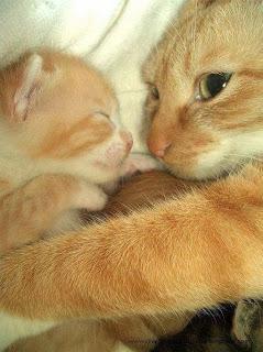 Imagenes de gatos