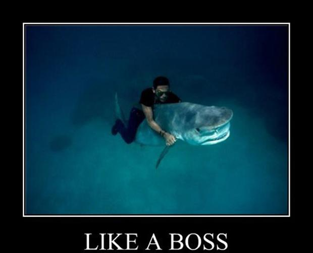 Funny Like A Boss Meme : Fubarfarm like a boss ii