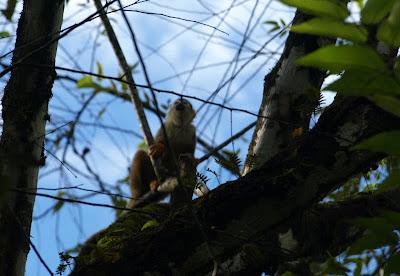 Costa Rica - Oso Peninsula