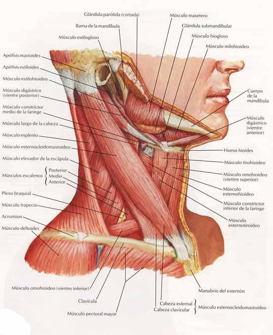 La osteocondrosis de la séptima vértebra cervical los síntomas