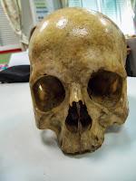Cráneo real.