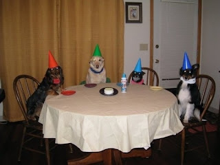 Funny Animals Party