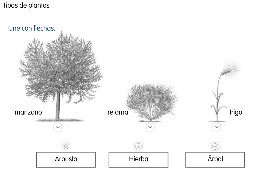 Blog de Ana Bastida 2º TIPOS DE PLANTAS ÁRBOLES, ARBUSTOS Y