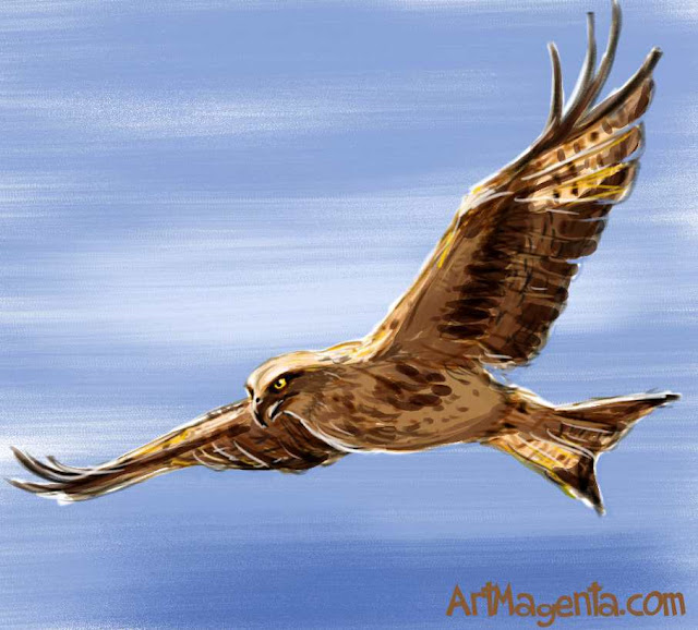 Red Kite from Bird of the Day by ArtMagenta.com