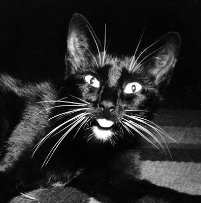 Imogen Cunningham, El gato de Edward Weston