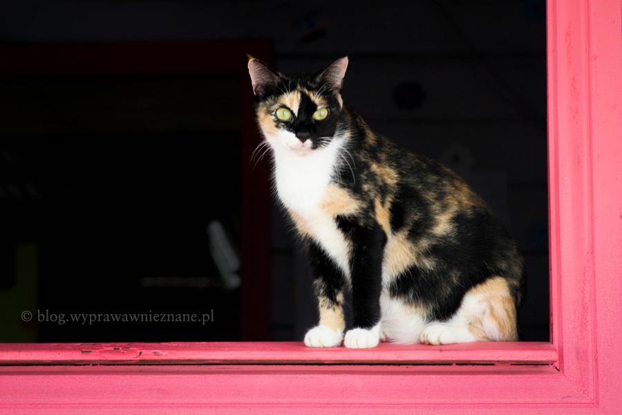 zdjęcie Brazylia dżungla amazońska różowy kot