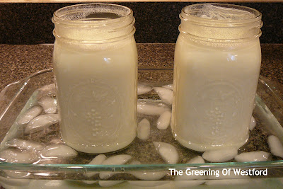 cooling milk to proper temperature to make yogurt