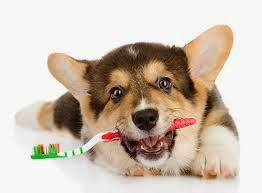 How to get rid of bad breath in dogs