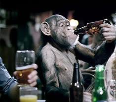http://2.bp.blogspot.com/-K_oo7BxwzyU/UFar-wfmmuI/AAAAAAAAAUQ/dhBjw-G2K-0/s400/Monkey%2BDrunk%2BFunny%2BPic.jpg