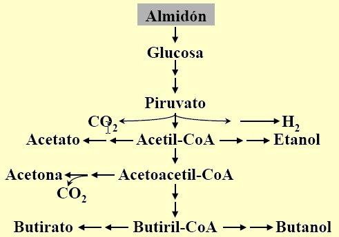 Diagrama Fermantacion C.acetobutylicum