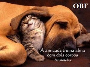 Frases de Amizade, Um amigo merece sempre o melhor