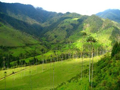 Valle Cocora, near Salento, Colombia.