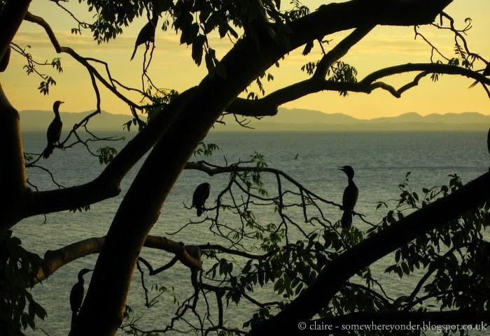 Anhinga birds silhouetted on tree branches - Isla de Ometepe - Nicaragua 2009