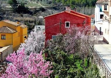 Ametlres florits a Benilloba.