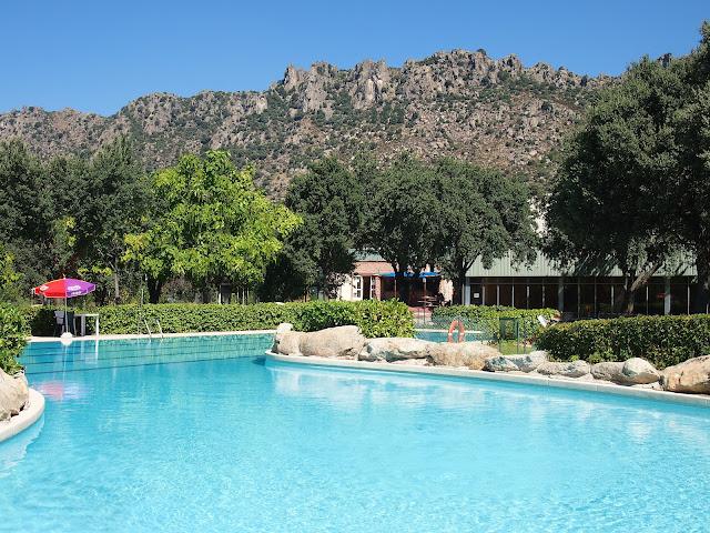 Swimming Pool Cows Alma Schouman 39 S Blog