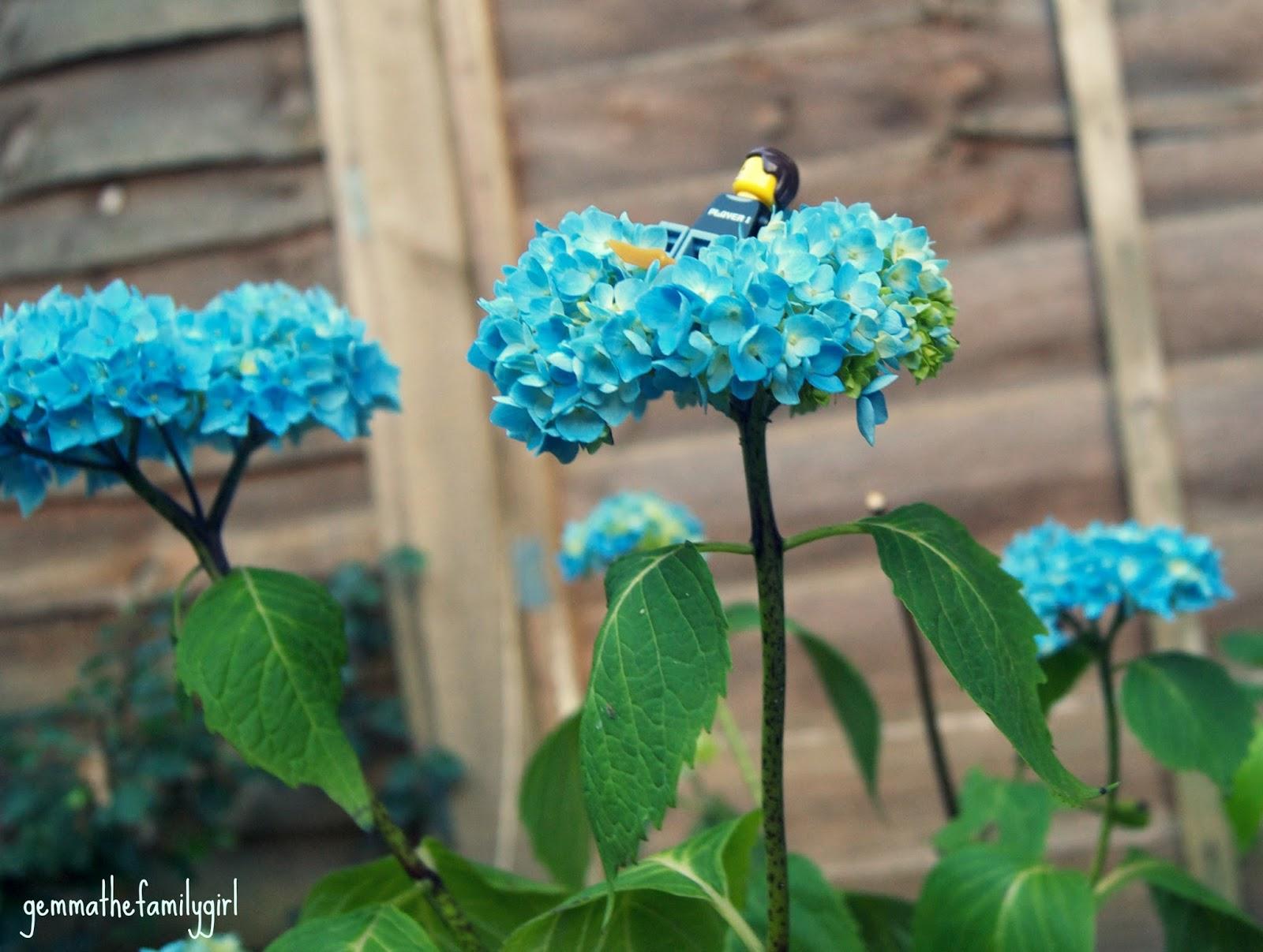 lego, geek, mini figure, photography, blue flowers