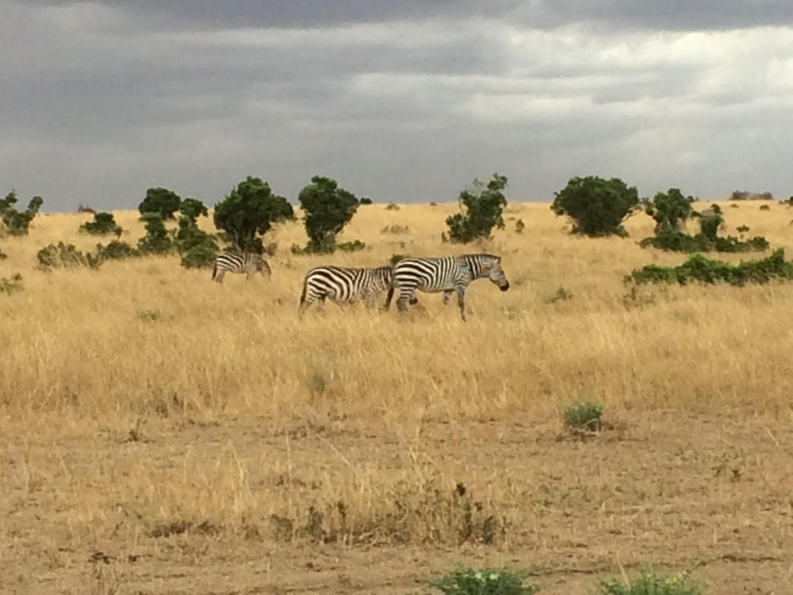 savann i väst