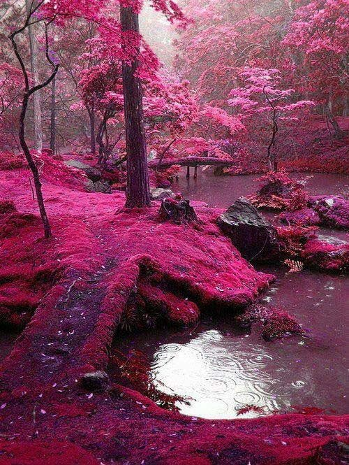 amazing natural scene in pink color