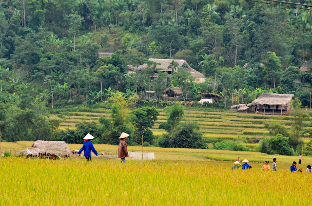 Peaceful Tay village - on the way from Lao Cai to Ha Giang