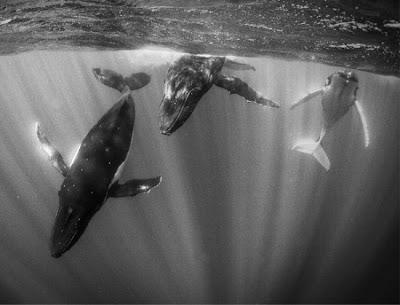 dicas fotos animais baleias