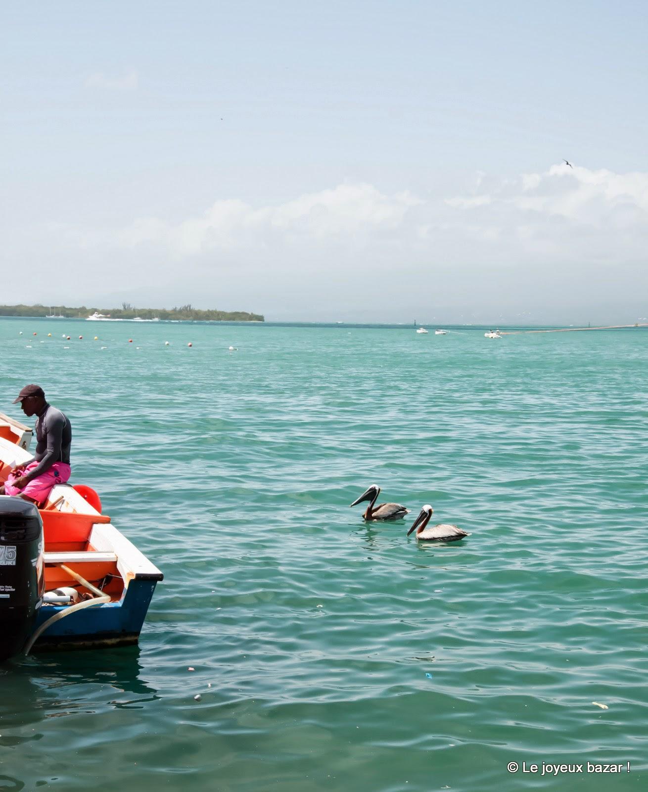 Guadeloupe - Pointe à Pitre  - la darse - pélicans
