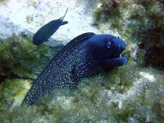 Scuba Plus buceo en Menorca - El dique 3
