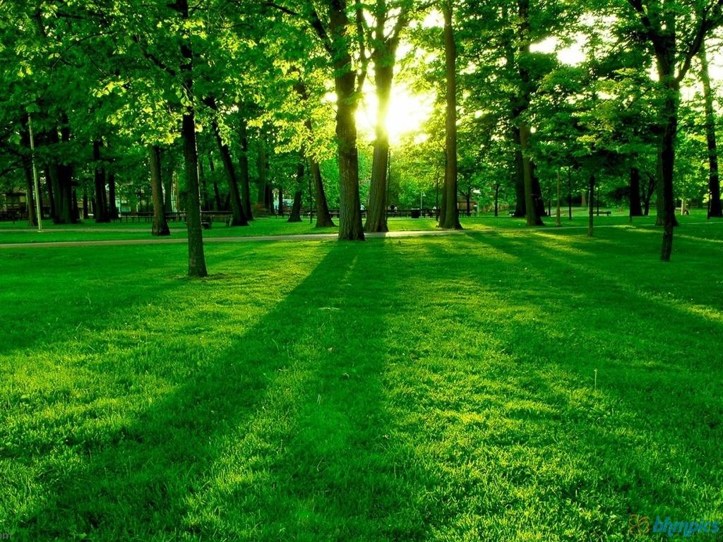 http://2.bp.blogspot.com/-KbLww_WSglw/TuhQ-Kv9uqI/AAAAAAAAAnM/vtBfsNutpiY/s1600/green_grass_wallpaper-1024x768.jpg