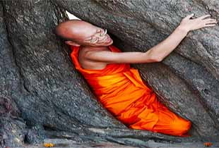 Budhdhist Monk Protests Atop a Tree photo