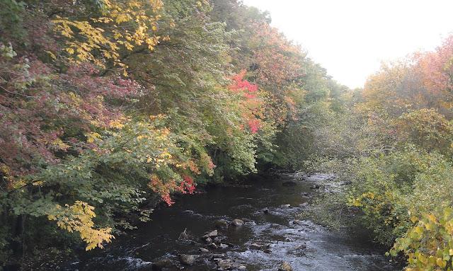 Magnicent Autumn Trees